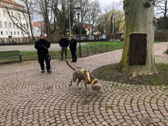 Ein Bild, das draußen, Gras, Hund, Parken enthält. Automatisch generierte Beschreibung
